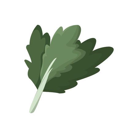 A chard vegetable nutrition vitamin food health vector illustration