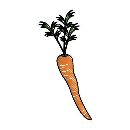 kale: Carrot nutrition food raw vegetable image vector illustration