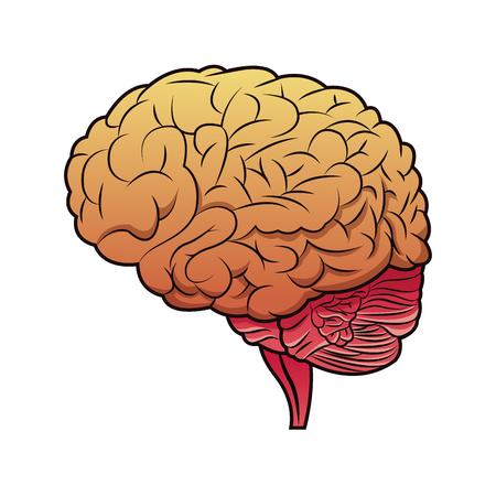 Brain mind idea creativity image vector illustration