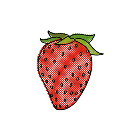 draw strawberry fruit fresh food design vector illustration royalty