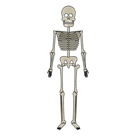 burial: drawing skeleton human bones skull medicine vector illustration Illustration