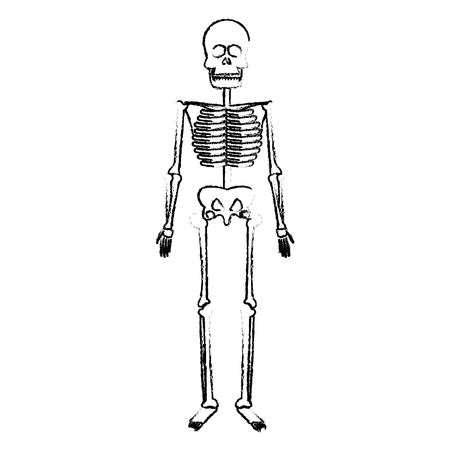 Skeleton Human Body Bones Medical Vector Illustration Royalty Free