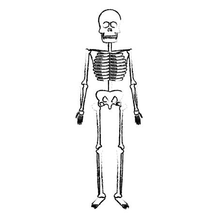 skeleton human body bones medical vector illustration Illustration