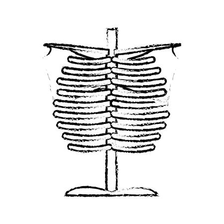sketch human chest bones anatomical medical vector illustration