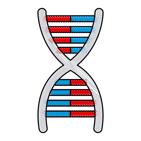drawing dna molecule chromosome biology genetic vector illustration