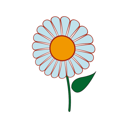 beautiful single daisy flower isolated on white background vector illustration