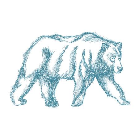 cute bear: animal wild bear, blue hand-drawing. vector illustration.