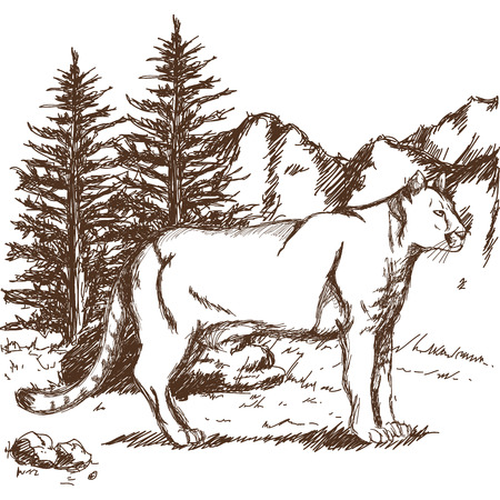 hand drawn cougar or mountain lion. landscape animal sketch wildlife vector illustration