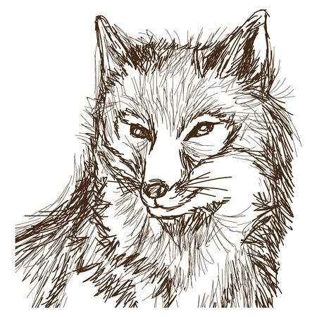 wolf wildlife animal image is hand drawn. portrait pencil sketch of wolf vector illustration Illustration