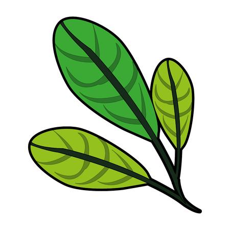 vegetate: leaf or leaves icon image vector illustration design
