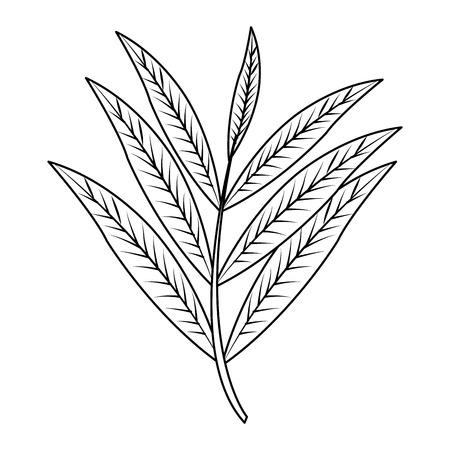 leaf or leaves icon image vector illustration design  single black line Illustration