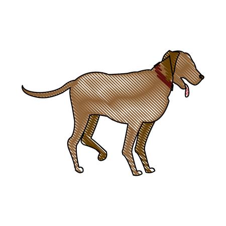 drawing cartoon dog walking pet animal vector illustration