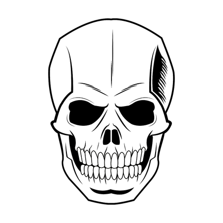 skeleton of the human head, vintage bone vector illustration