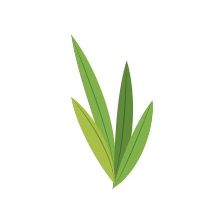 foliage  natural: natural leaves foliage flora green vector illustration