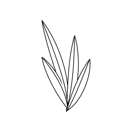 foliage  natural: natural leaves foliage flora outline vector illustration