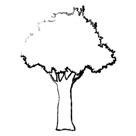 foliage  natural: natural tree foliage branch trunk sketch vector illustration Illustration