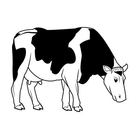 holstein cow standing farm bovine image vector illustration Illustration
