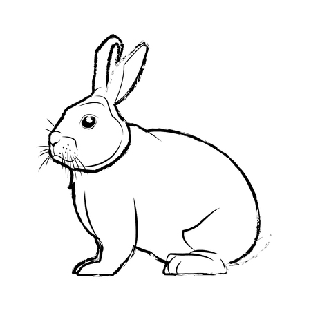 wild rabbit nature rodent farm image vector illustration Illustration