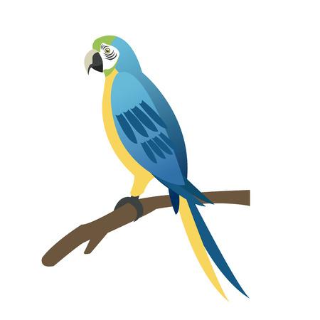 aviary: Blue and yellow parrot Brazil vector illustration Illustration