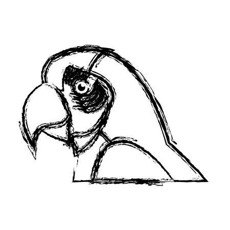 macaw amazon bird brazil wildlife image vector illustration Illustration