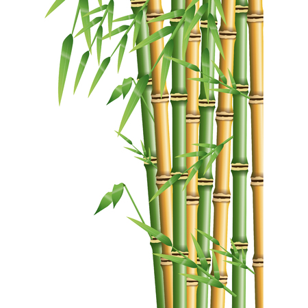 fresh bamboo leaves border, botanical zen forest, tropical spa decoration. vector illustration Illustration