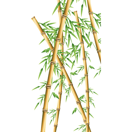 bamboo forest set. spa nature. plant tree with leaves. vector illustration