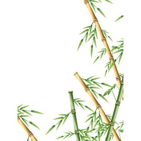 springtime: bamboo forest set. spa nature. plant tree with leaves. vector illustration