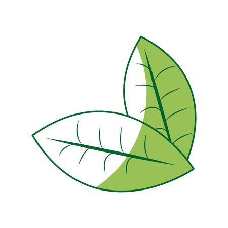 fresh green mint leaves herbal drink icon vector illustration Illustration