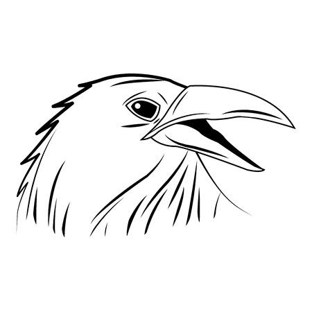 hooded: crow, raven or corvus bird vector illustration