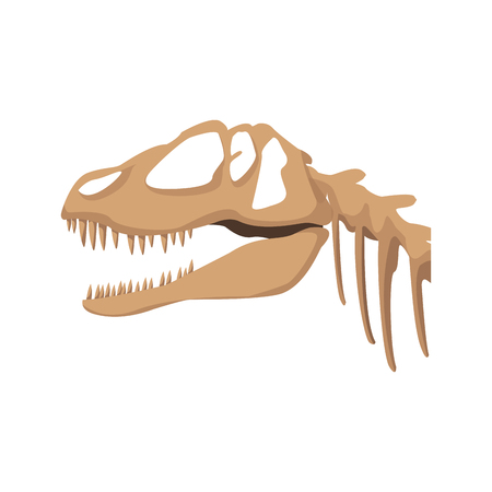fossil dinosaur head skeleton lizard animal bone vector illustration