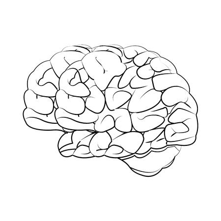 occipital: human brain medical science section schematic vector illustration Illustration