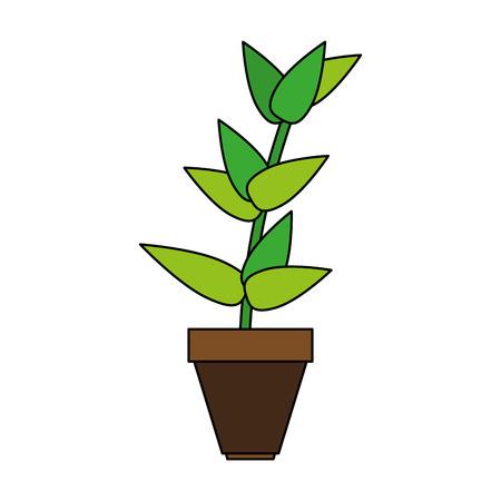 matera plants inside vector icon illustration design graphic