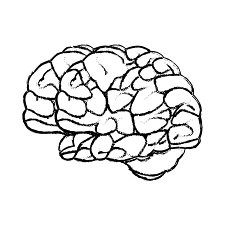 sketch brain human organ mind icon vector illustration Illustration