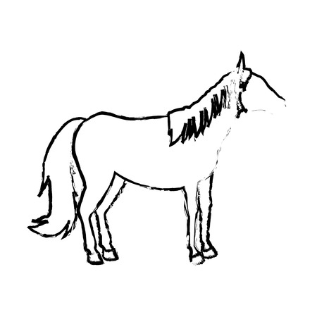 foal: horse animal mammal nature equine icon vector illustration