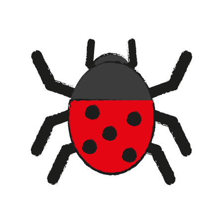 undergrowth: Wonderful ladybug insect illustration icon vector design graphic draw
