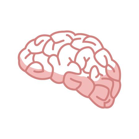 human brain for medical healty design vector illustration Illustration