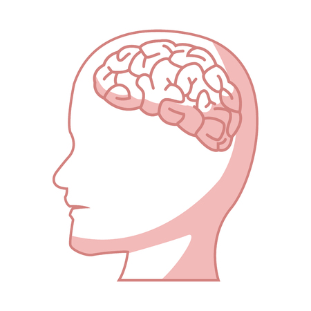 human head with brain part organ anatomy vector illustration Illustration