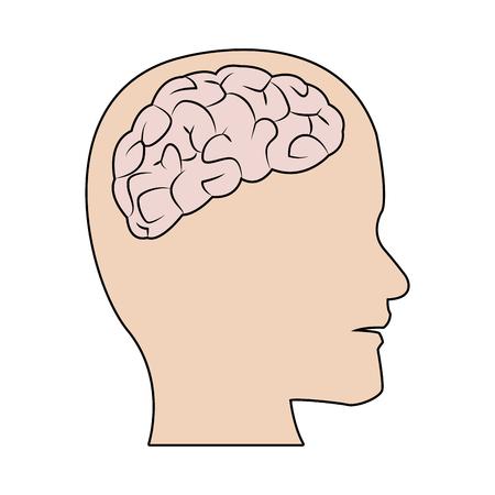human brain medical schematic anatomy vector illustration Illustration