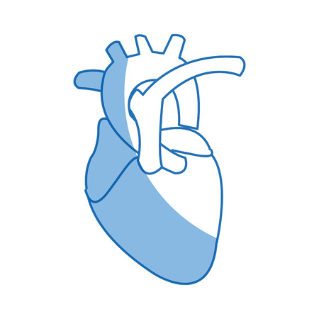 human heart anatomy cardiology healthcare symbol vector illustration