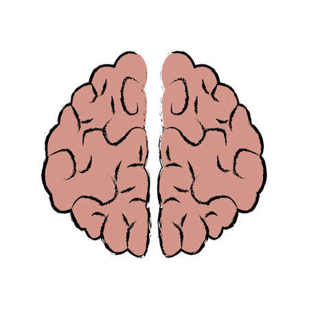 brain human organ part anatomy medical vector illustration