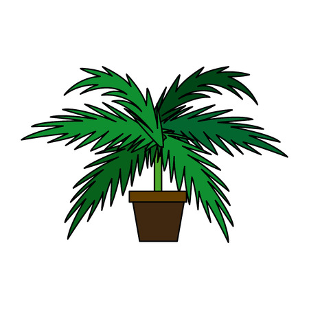 cultivate: potted palm tree plant natural decoration interior vector illustration Illustration