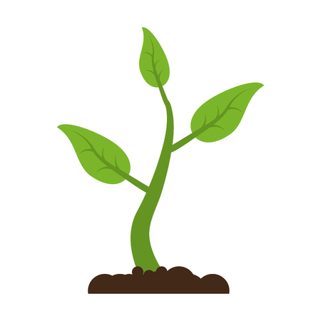 plant with leaves in soil  icon image vector illustration design Illustration