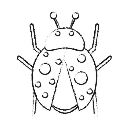 Ladybug insect icon image vector illustration draw.