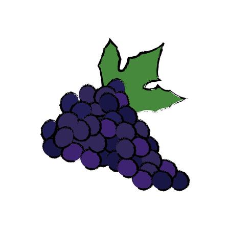grape fresh fruit dieting nutrition concept vector illustration