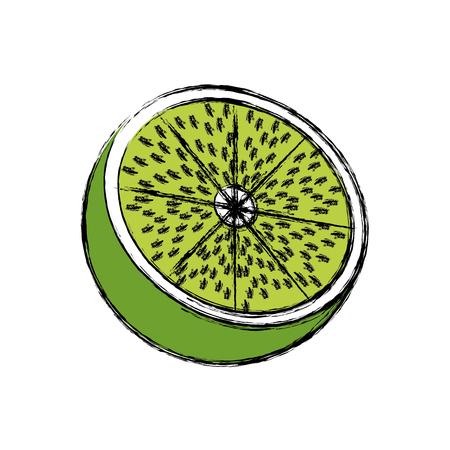 lemon citrus fruit fresh half vitamin vector illustration