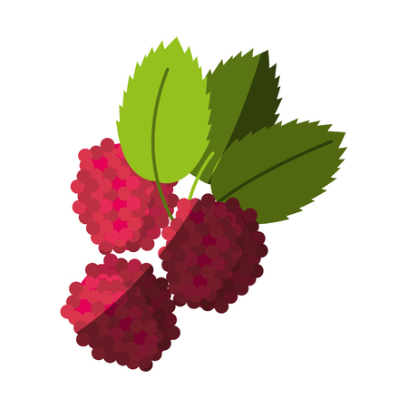 market gardening: raspberry fruit icon image vector illustration design