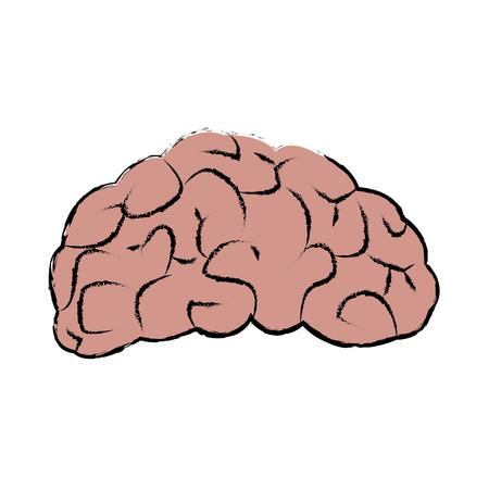 Brain human organ part vector illustration
