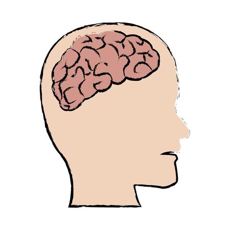 Human brain, medical schematic anatomy vector illustration Illustration