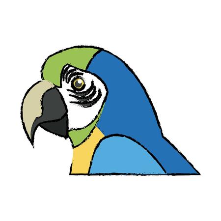 macaw amazon bird brazil wildlife image vector illustration Ilustração