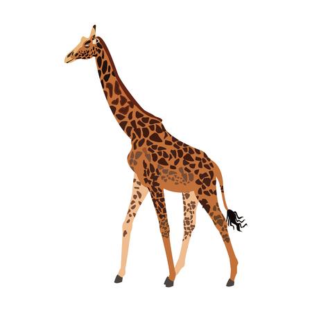 herbivore: giraffe animal herbivore african wildlife vector illustration Illustration